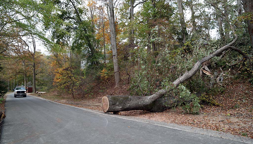 Part of the tree laying near a road with a vehicle in the distance
