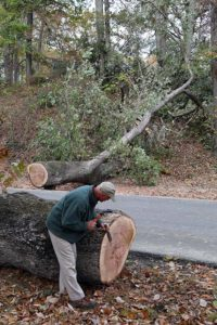 Worker examining the tree's trunk after it had been sawed in half